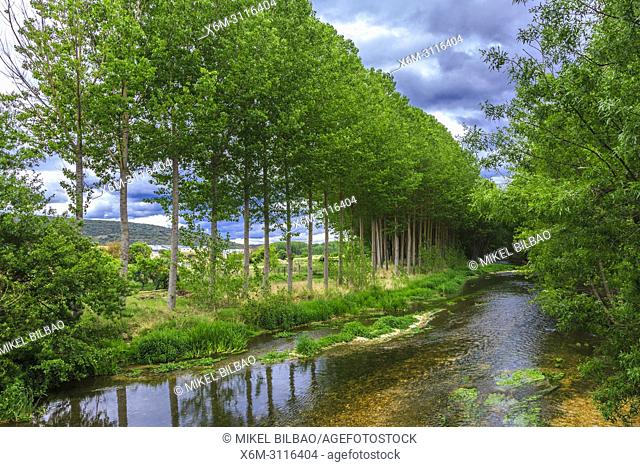 Poplar grove and Ega river. Murieta, Navarre, Spain, Europe