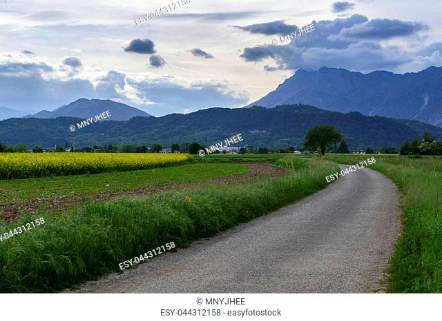 Rural landscape with green and rapeseed fields, asphalt road and cloudy mountains on the background in Meduno, Italy