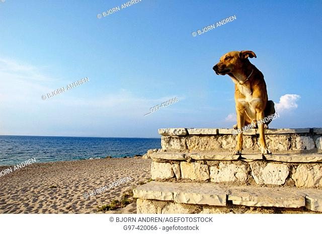 Dog looking to the sea. Greece