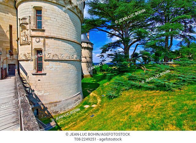 france,41, loire castles : chaumont castle & cedar