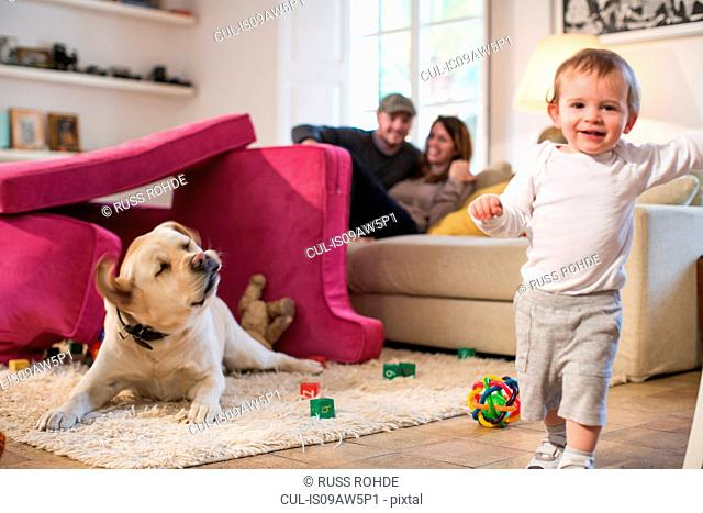 Baby boy and pet dog playing in fort made from sofa cushions, looking at camera smiling
