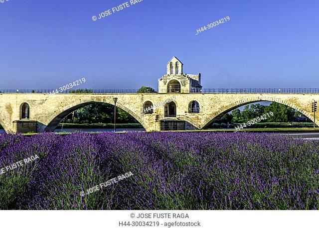 France, Provence region, Avignon city, St. Benezet Bridge, W.H., lavanda field