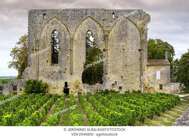 Vineyards. Ruins of Les Cordeliers church. Saint-Emilion Bordeaux wine region. Aquitaine Region, Gironde Department. France Europe