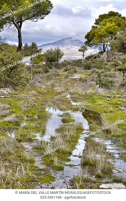 Puddles and pines in The Piquillo and Casillas peak on the background on a cloudy day. Madrid province. Spain