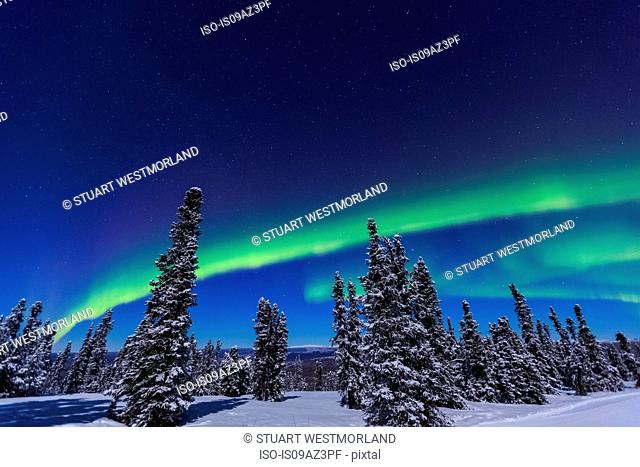Aurora borealis, Northern Lights above tent lit up with lantern, near Chena Resort, near Fairbanks, Alaska