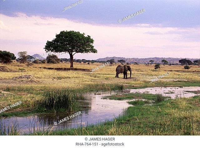 African elephant Loxodonta africana, Tarangire National Park, Tanzania, East Africa, Africa