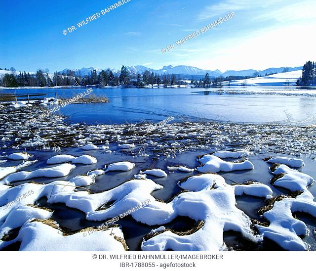 Schwaltenweiher lake, snow, Seeg, Allgaeu, Bavarian Swabia, Bavaria, Germany, Europe