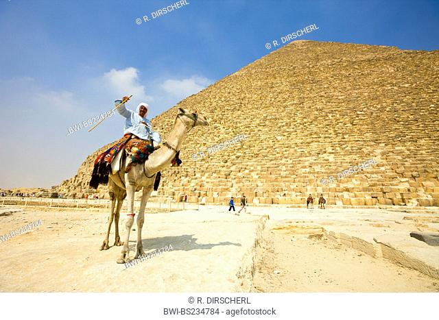 Camel Driver in Front of Pyramid of Cheops, Egypt, Kairo