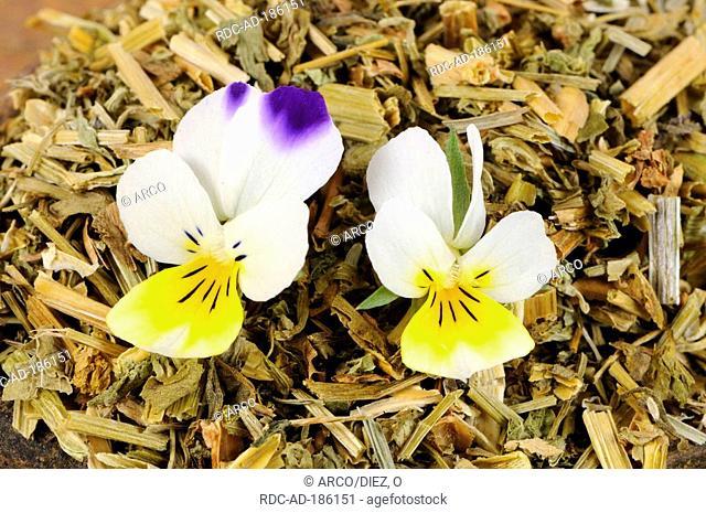 Field Pansy, dried, Viola arvensis