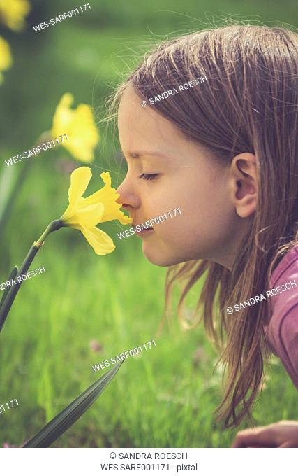 Little girl smelling at daffodil, Narcissus pseudonarcissus