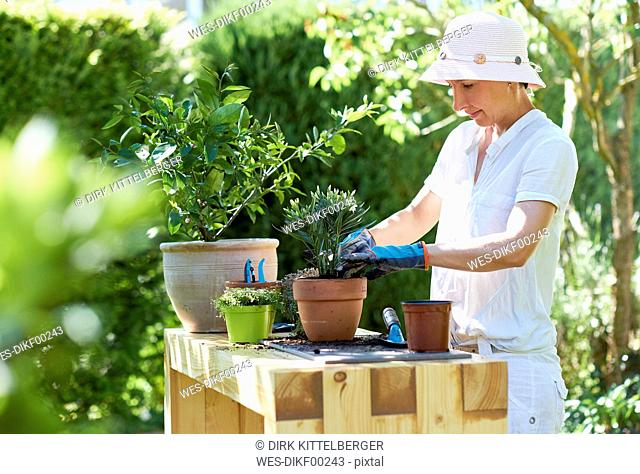 Woman potting oleander at table in garden