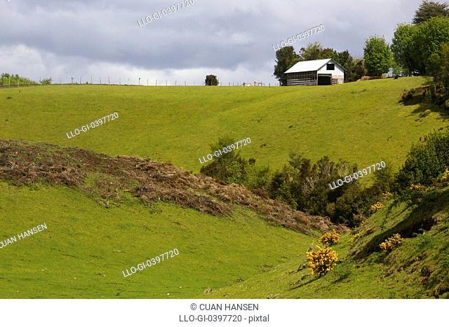 The lush Chiloe pastures, Chiloe Island, Region de Los Lagos, Patagonia, Chile, South America