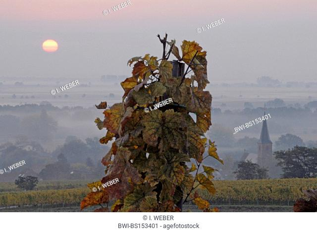 sunrise near Forst at the German Wine Route, Germany, Rhineland-Palatinate, Palatinate, Forst