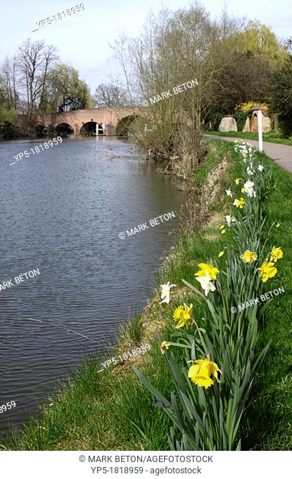 Spring river scene with daffodils at Sonning Berkshire
