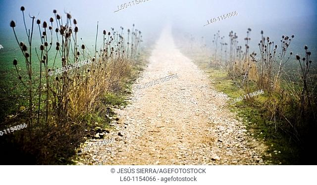 'Camino de Santiago' Way Of St. James in Navarre, Spain