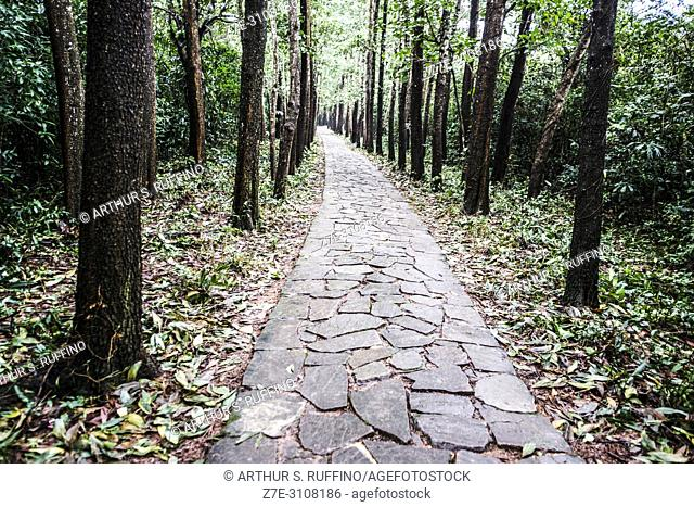 My Son Sanctuary. Pathway to archaeological site. UNESCO World Heritage Site, Quang Nam Province, Da Nang, Vietnam, Southeast Asia