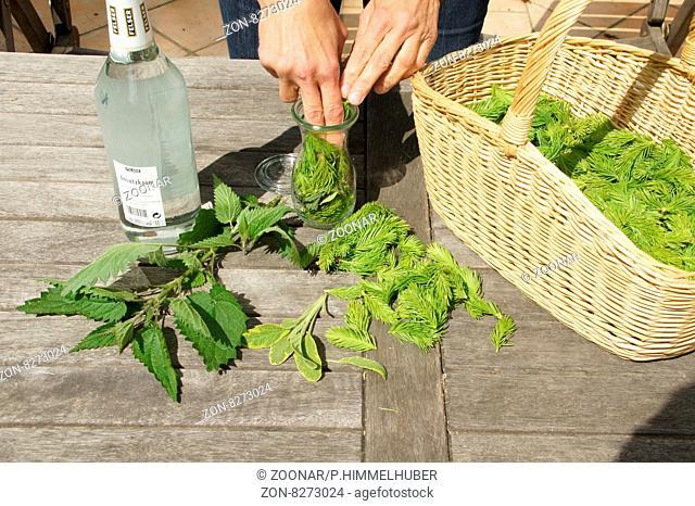Fichtenspitzen-Geist ansetzen, Pflanzenteile in Glas geben