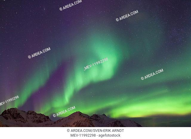 Northern Lights - Aurora Borealis over the Lofoten - Norway