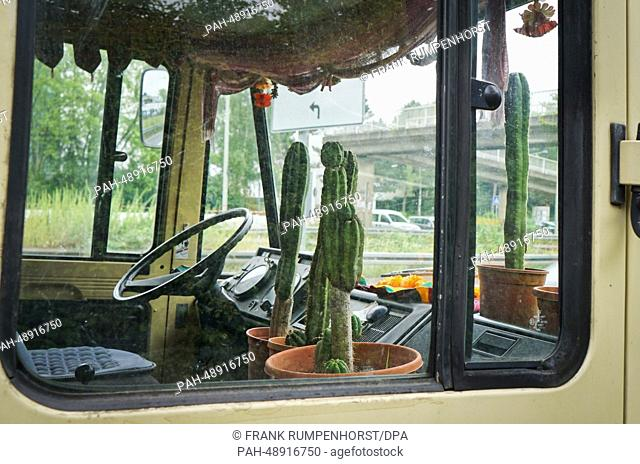 Cacti stand on the passenger's seat and behind the windshield of a truck which is parked on the side of a road in Frankfurt Main, Germany, 26 May 2014