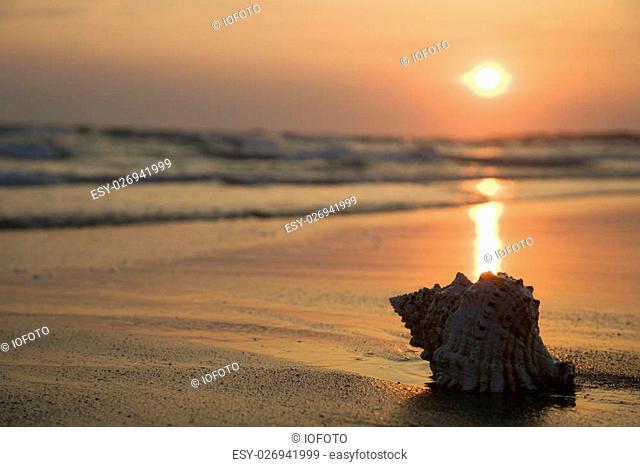 Image of seashell on shoreline at sunset