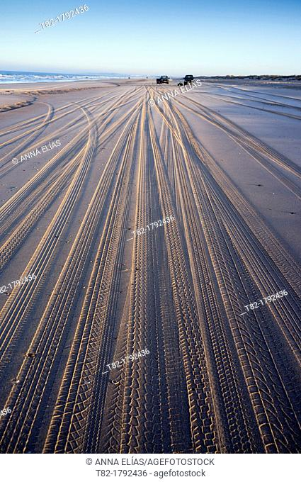car tire marks on the sand of the beach at low tide. Doñana National Park, Huelva, Andalusia, Spain Europe