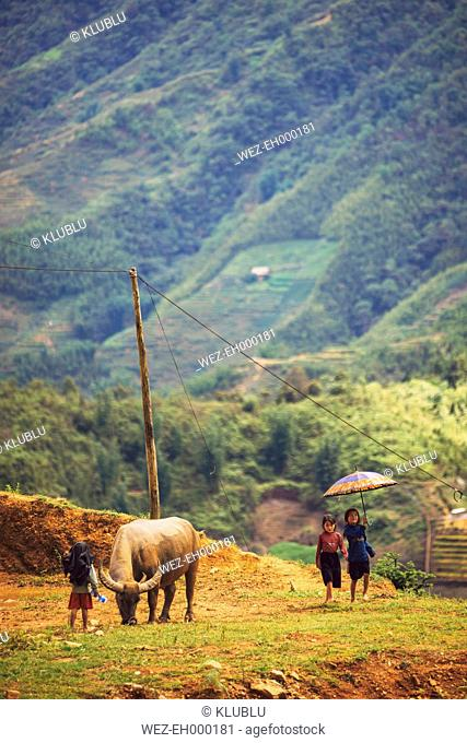 Vietnam, Lao Cai, children playing at the rice field