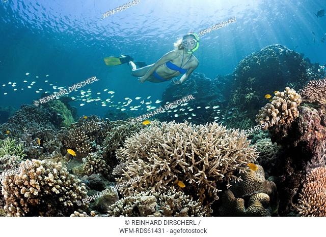 Free diving over Coral Reef, Amed, Bali, Indonesia