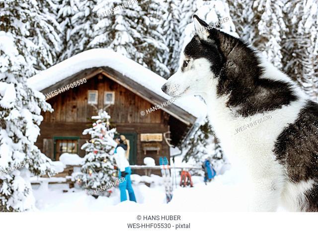 Austria, Altenmarkt-Zauchensee, dog in snow with woman at hut in background