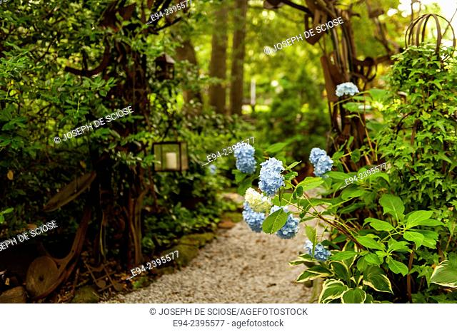 A pathway in a southern garden with hydrangeas.Georgia USA
