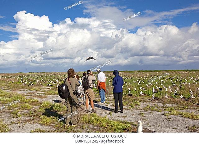 Hawaï , Midway , Eastern Island , Great Frigatebird  Fregata minor ridgwayi