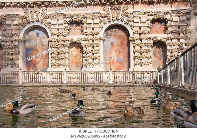 Ducks swimming in mercury fountain at Alcazar Palace, Sevilla, Andalusia, Spain