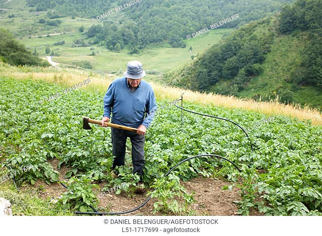 Old man with an axe into his potatoes patch, La peral, Somiedo Nature Reserve, Asturias, Spain