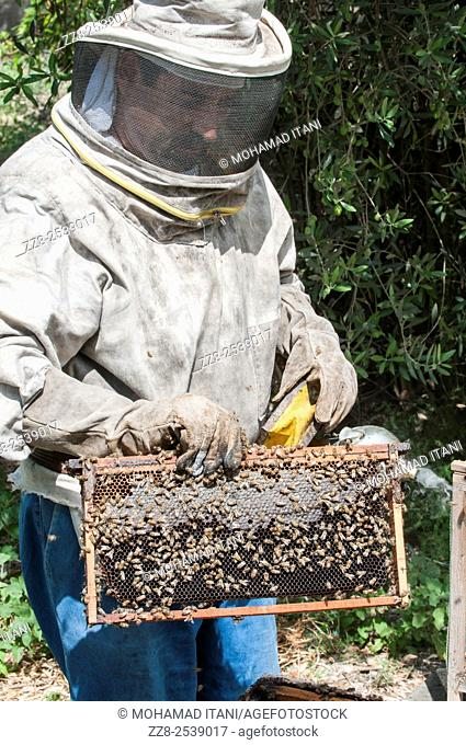 Man working in a bee farm Ein El Delb Lebanon