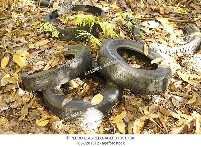 Abandoned tires in a forest of Lugo, Galicia, Spain