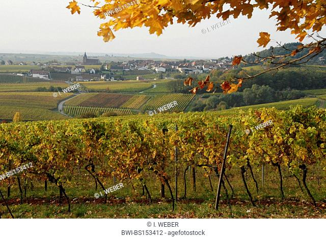 vineyards at Burrweiler, Deutsche Weinstrasse, Germany, Rhineland-Palatinate, Palatinate