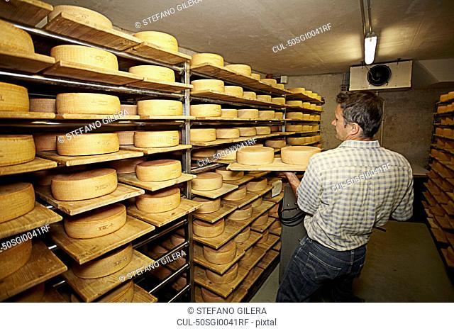 Worker aging wheels of cheese