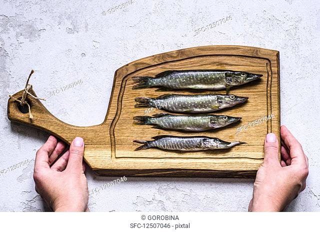 Fresh pike on a wooden board in hands