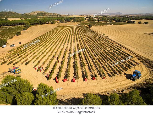 Aerial photography using a drone: vineyards, vintage. Higueruela, Albacete province, Castilla-La Mancha, Spain