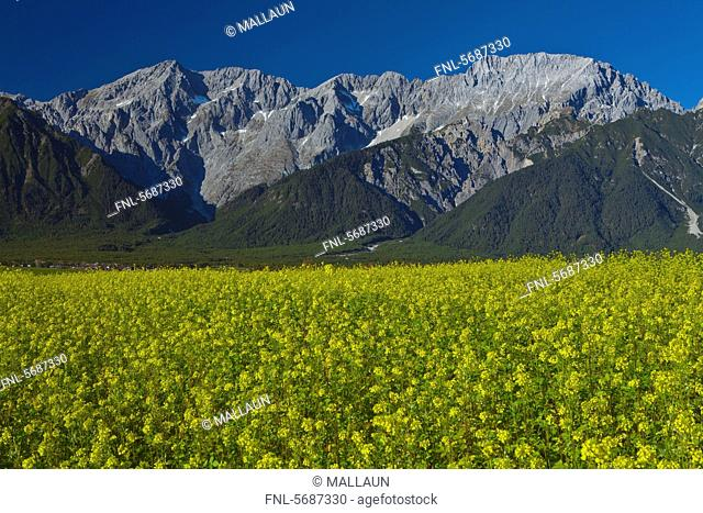 Alps behind rape field, Mieming, Austria