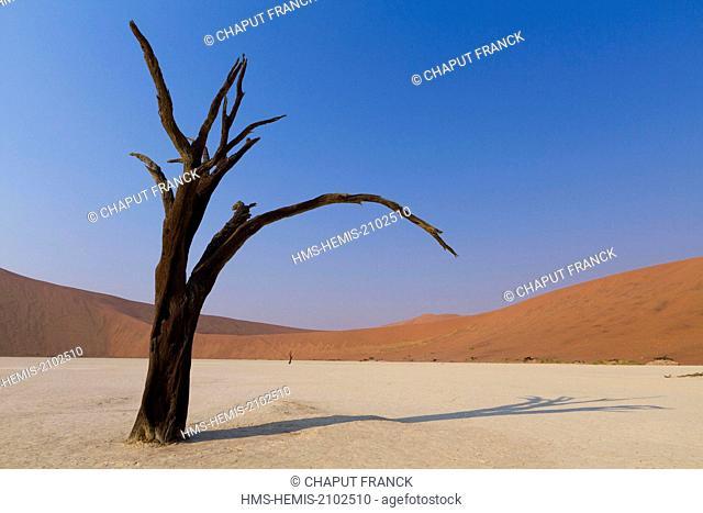 Namibia, Hardap region, Namib desert, Namib Naukluft national park, Namib Sand Sea listed as World Heritage by UNESCO, near Sossusvlei, Dead Vlei