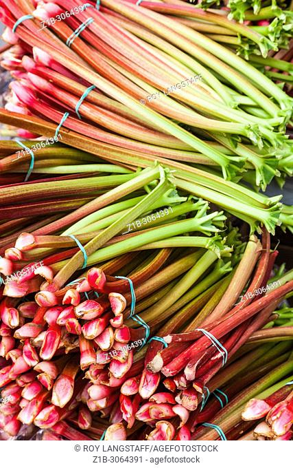 Bundles of Rhubarb for sale at the Steveston weekend farmers market near Vancouver, British Columbia