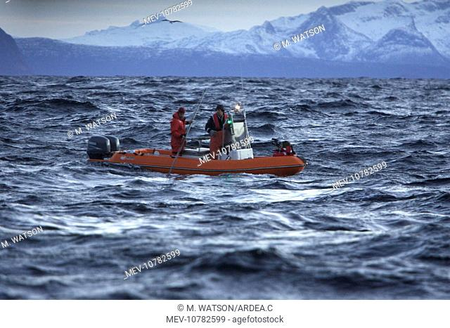 Observation boat with scientists looking for Killer Whales (Orcinus orca)
