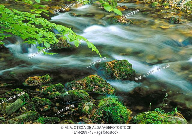 Creek. Selva de Irati. Pyrenees. Navarre. Spain