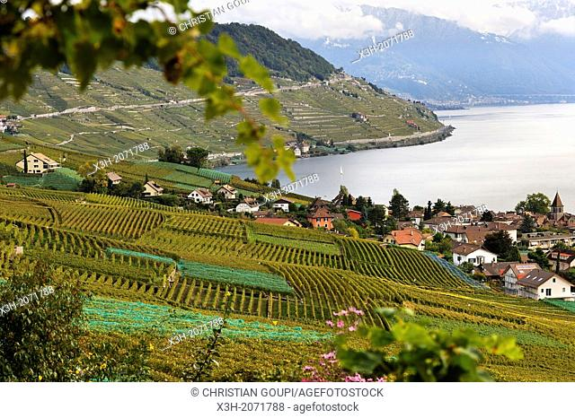 village of Cully surrounded by the Vineyard terraces of Lavaux on the bank of Leman Lake, around Lausanne, Canton of Vaud, Switzerland, Europe