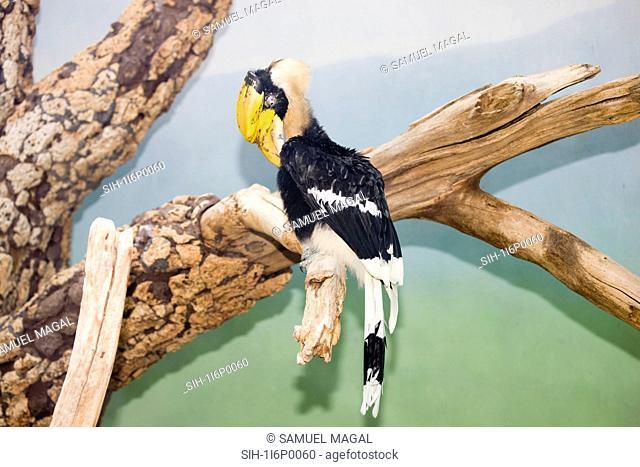 New York City, Bronx Zoo, Great Hornbill Type Bird
