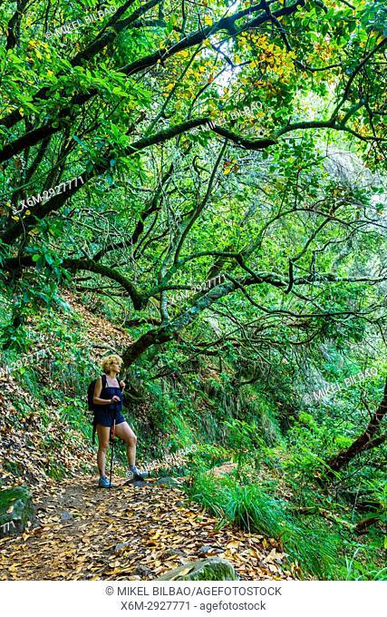 Woman in a laurisilva or laurel forest. Levada de Caldeirao Verde. Santana. Madeira. Portugal, Europe