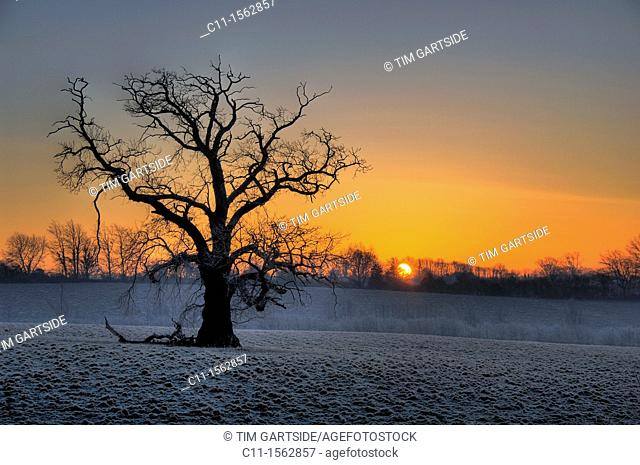 winter,sunrise ,sussex,england,uk,europe