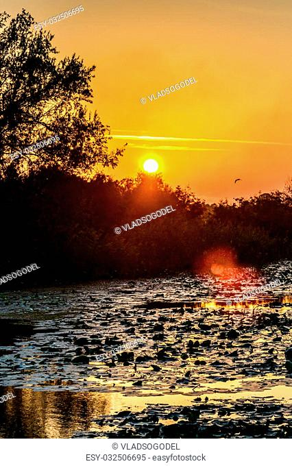 Sun setting over woods near a river. Horizontal view of sun setting over some trees near the shore in a summer day