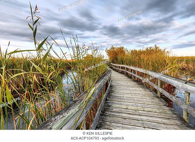 Boardwalk in Oak Hammock Marsh, Manitoba, Canada