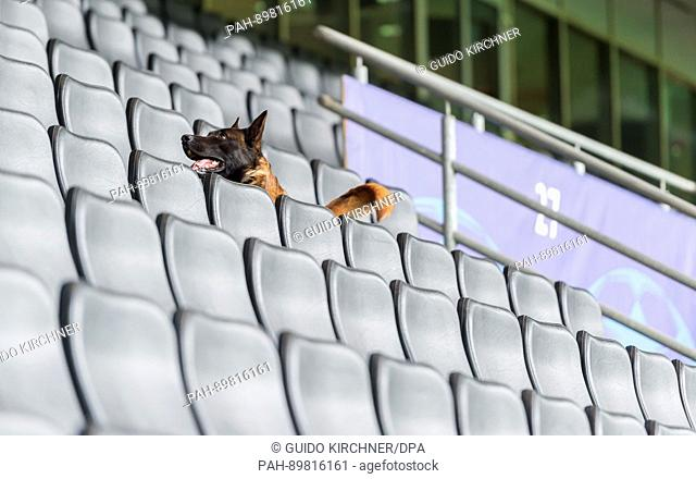 A sniffer dog for explosive devices of the police searches the Signal Iduna Park in Dortmund, Germany, 12 April 2017. Three explosions occurred next to the team...